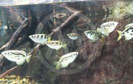 stime med hvide sorte fisk i akvarium og klipper