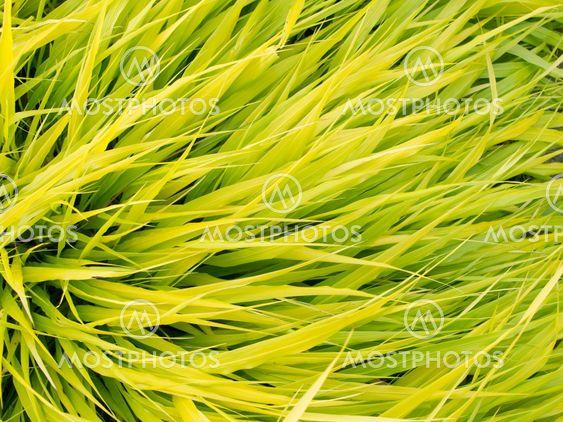 Vihreä lehdet muokkausaine