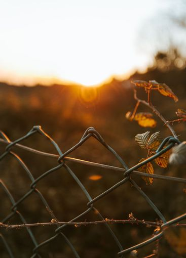 A moody shot of a fence with a out of focus background...