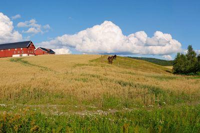 Norwegian Farm Panorama 1