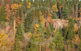 Mixed forest with a rock wall and fall colors