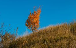 lonely tree with yellow and orange autumn foliage