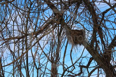 nest, a nest in a tree, hay, a nest of hay, in the trees,...