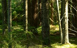 Forest in the shadows and light of the morning sun on a...