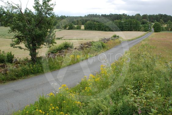Småländsk natur med byväg och stenmur  (Sweden)