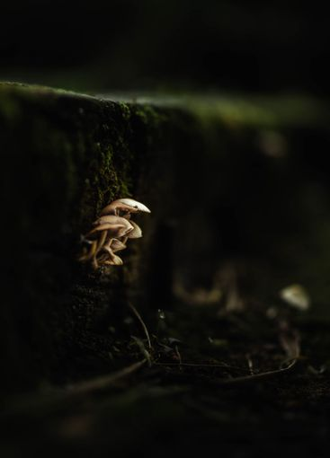 light mushrooms attached to a forest trunk
