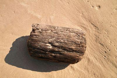 Driftwood on Wet Sand