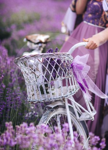 a bouquet of lavender in a basket on a bicycle in a...