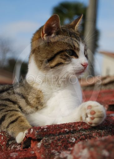 Cat on the roof 2