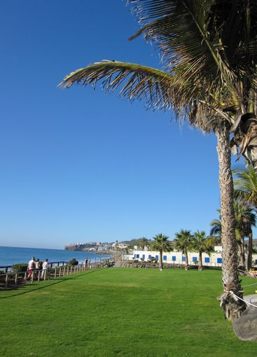 Blue sky with green grass and palm tree
