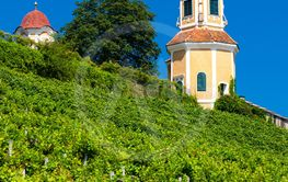 Castle Stainz and vineyard, Styria, Austria