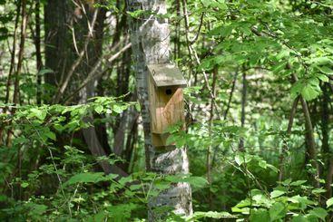 Fågelholk på en trädstam i en grönskande lövskog