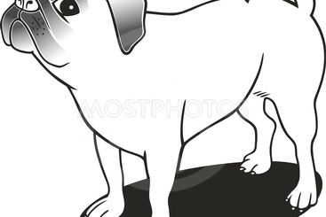 purebred pug for coloring book