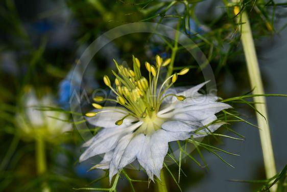 Blomma i närbild