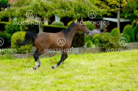 Horse in action