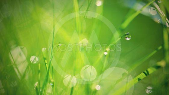 Green nature. Beautiful close up photo of nature. Green...