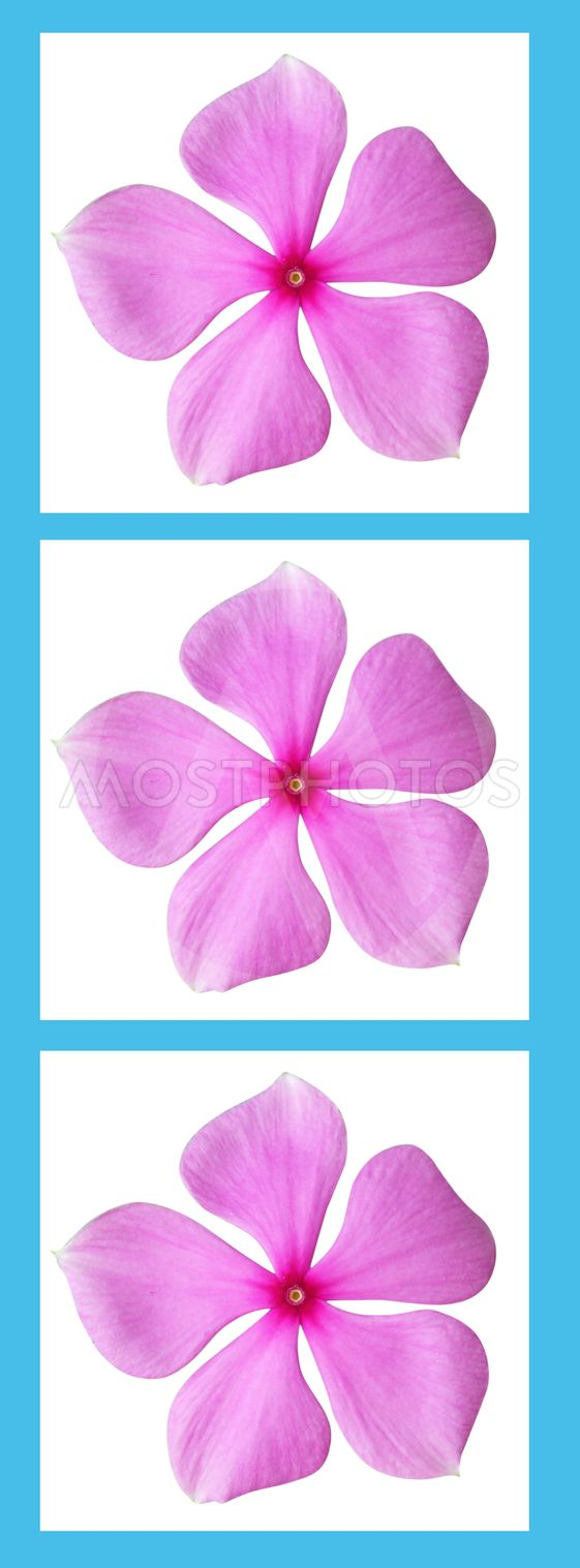 Pink flowers in a blue frame with blank space