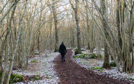 Vinterpromenad i Borga Hage naturreservat, Slottsskogen,...