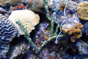 An underwater photo of coral.
