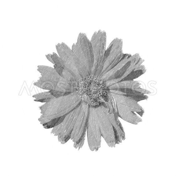 Decorative image of flower