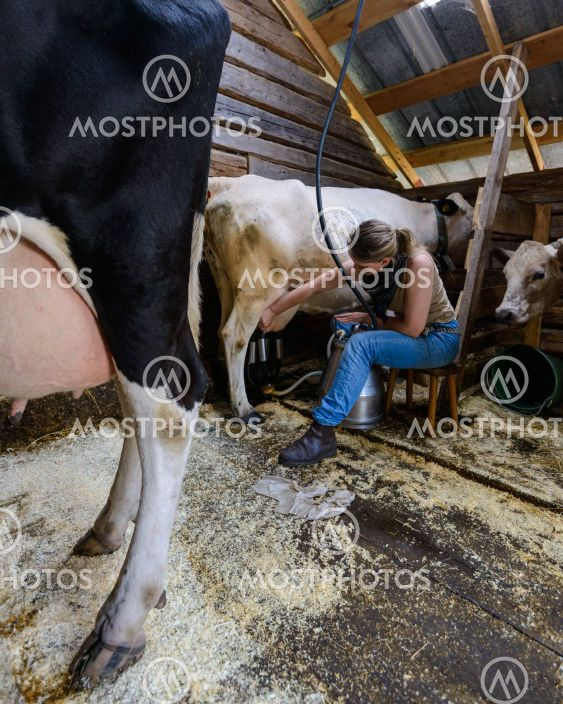 Woman milking cow, Arvselen, Dalarna, Malung-Sälen kommun