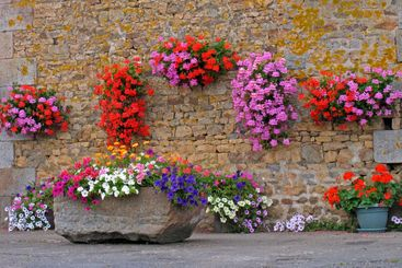 Le House with flowers, Brittany