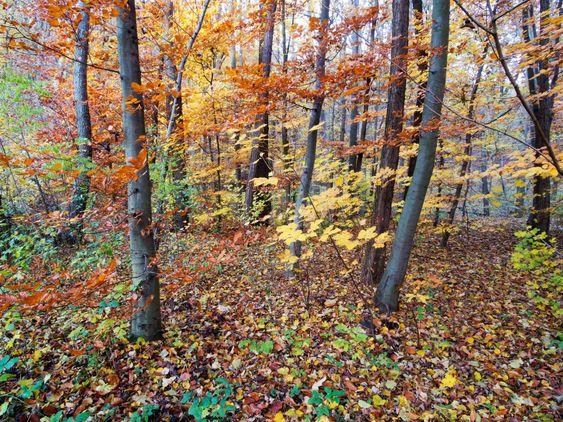 Skov i efteråret