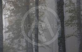Morgonljus i skogen