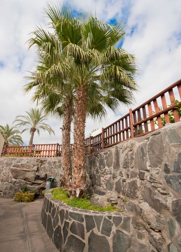 Palm trees on the Canary Islands