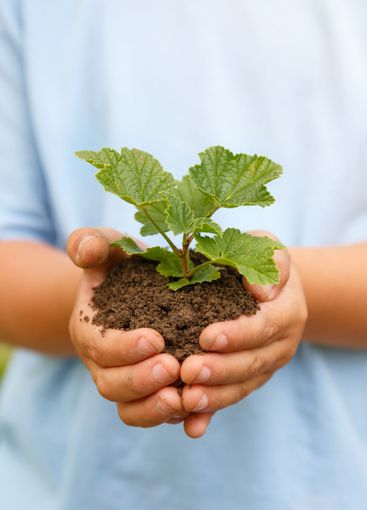 New life plant child hands holding tree nature living...