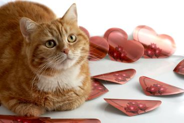 Red cat and hearts