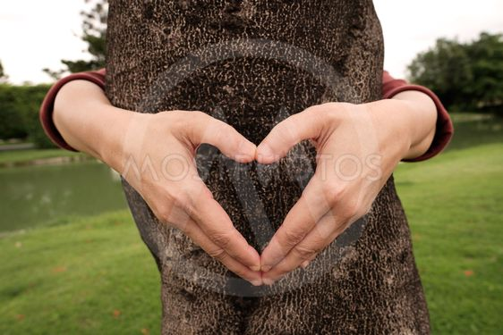 Hands making heart shape frame in front of tree