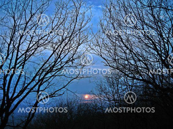 Auringonlasku ja puiden