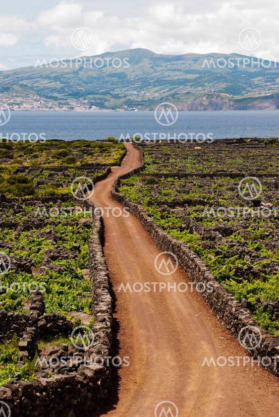 Azoriske vinmarker