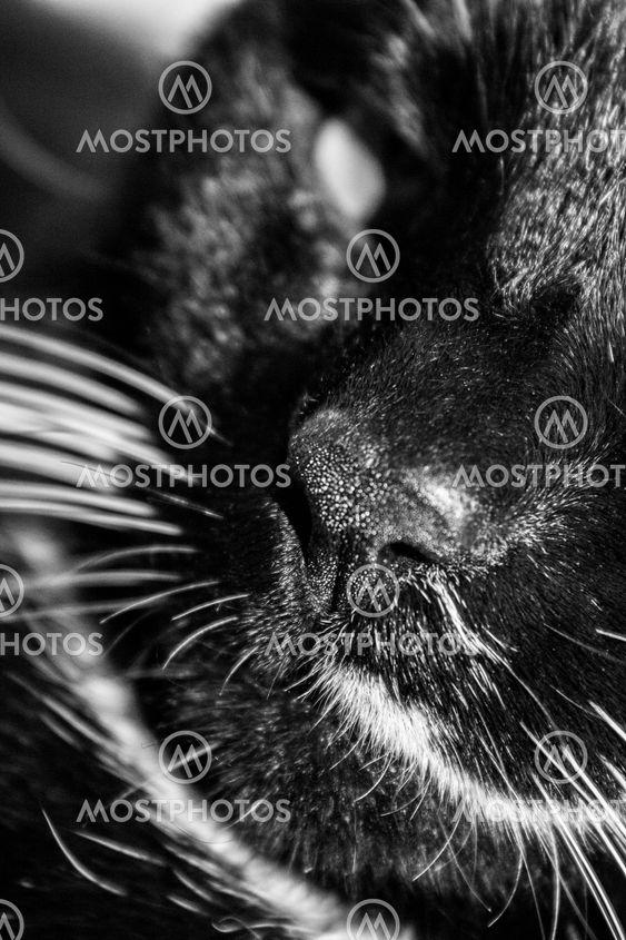 Katt svart