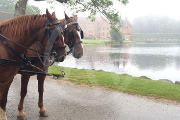 Hästar och slott