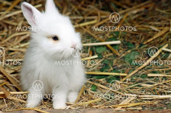 sweet little baby rabbit