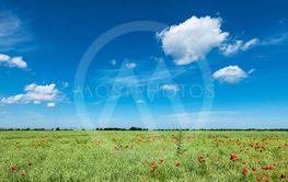 Green field with blue sky near Rostock, Germany