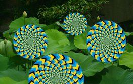 Spin Wheelie Garden