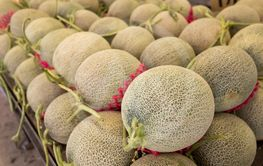 fruit of honeydew melons at the traditional mall