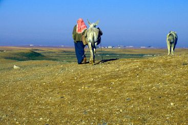 Bedouin and Donkey
