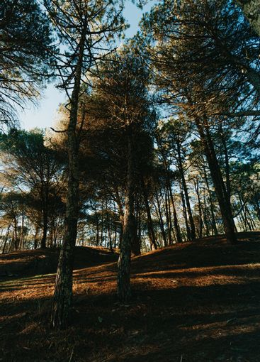 A wide angle shot of a forest with tall trees during the...