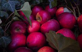 Röda vinteräpplen juläpplen - Silvertid