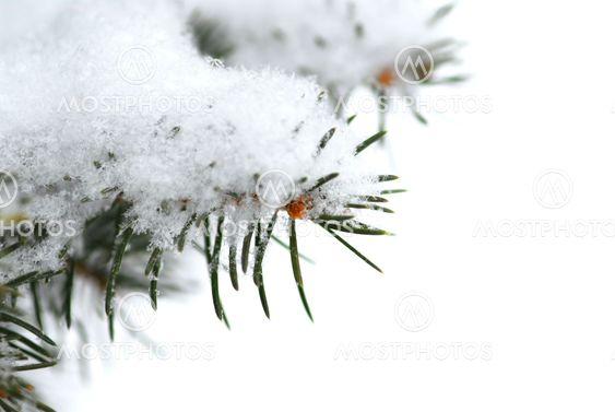 Snowy branch background