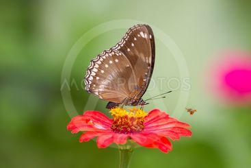 Butterfly on flowers in forest