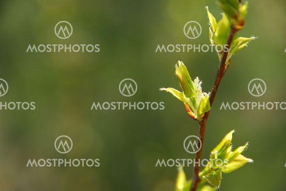 Spring leaf green