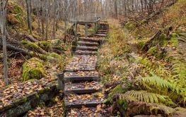 Trappa i skogen