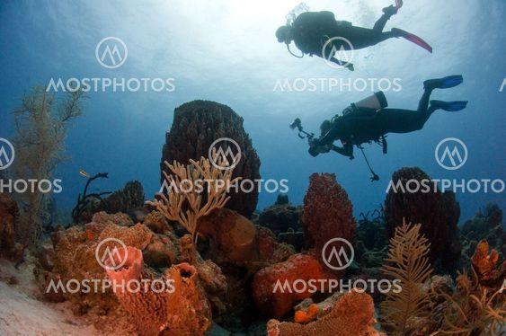 Dykkere og Reef