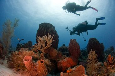 Divers and Reef