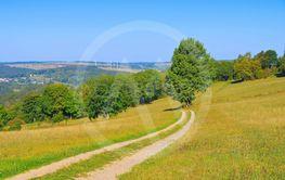 summer meadow in the Erzgebirge